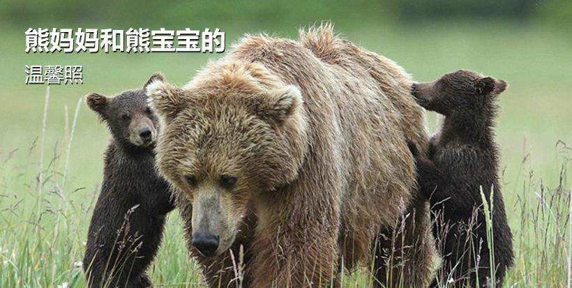 熊妈妈和熊宝宝的温馨照