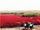 欣赏盘锦美丽红海滩